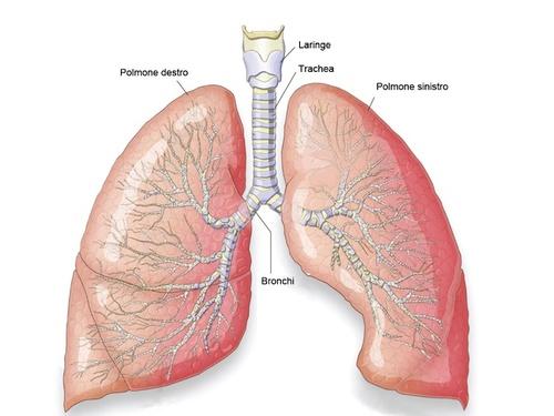 immagine polmoni